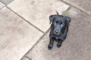 puppy-2421083_1280